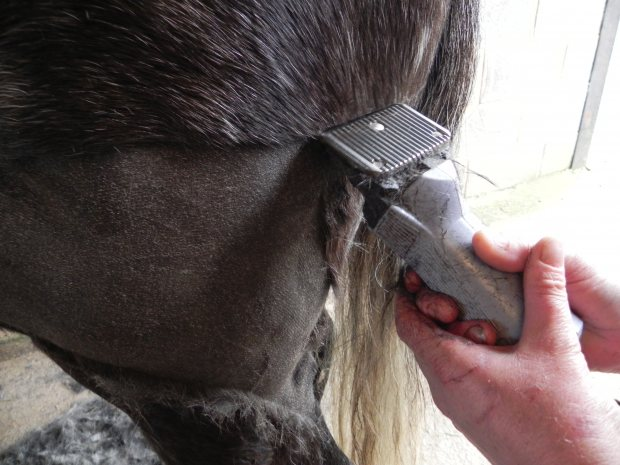 Top Tips for Clipping Hairies!