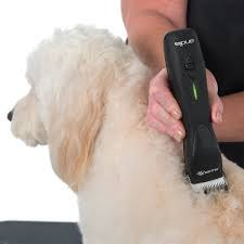 Dog Grooming at Home