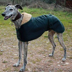 Cosipet Cosi Pet Wax Cotton Waterproof Greyhound Coat