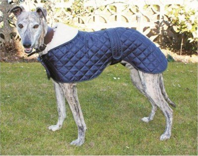 Cosipet Cosi Pet Greyhound & Whippet Anorak